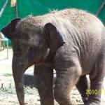 Слоны Тайланда