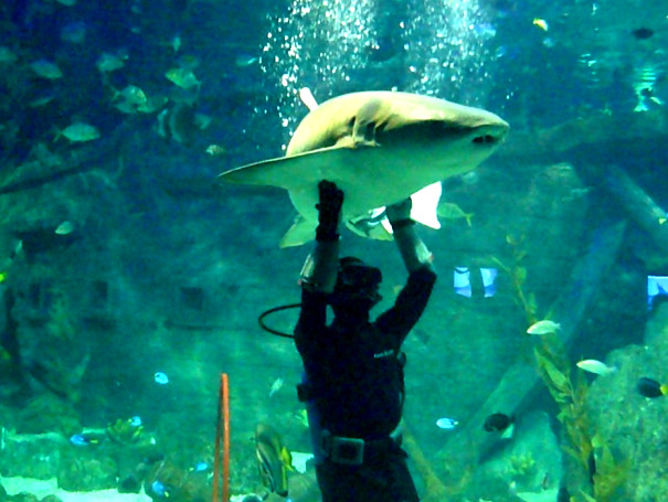 пресноводных плавают, океанариум в России, находятся экспозиция, живут виды, Сочи аквариум, другие рыбы
