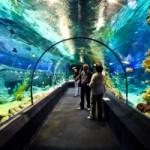 Уникальный океанариум — самый большой в России (г. Сочи)