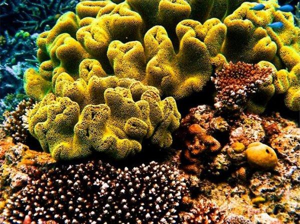 около, Большой, Барьерный, рифа, видов, году, самых, мира, рифов, течение, километров, числе, других, виды, время, Благодаря, подводного, стал