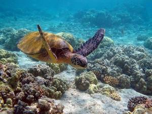 чудеса подводного мира, лучший дайвинг, глубоководный мир