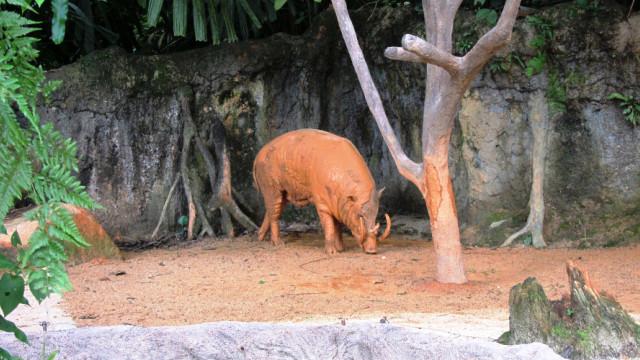 зоопарк в сингапуре фото, животные сингапурского зоопарка фото видео, доехать до зоопарка в сингапуре