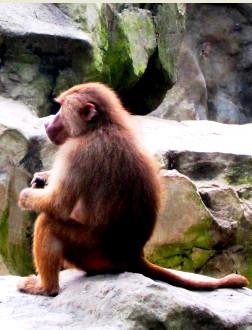 оопарк в сингапуре фото, животные сингапурского зоопарка фото видео  доехать до зоопарка в сингапуре