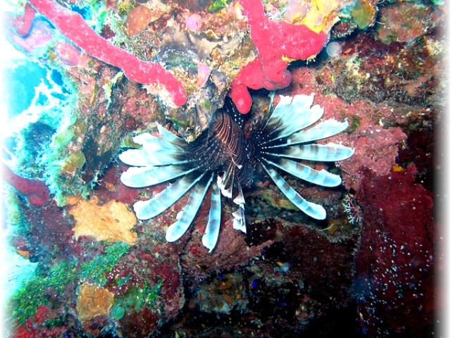 Белиза, рифа, является, Голубая, подводный, видов, дыра, морских, Большая, майя, Здесь, район, времени, года, домом, Большинство, живут, рифом