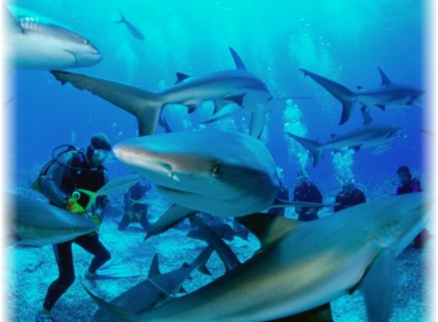 дайвинг в Белизе, риф Белиза, глубоководный мир