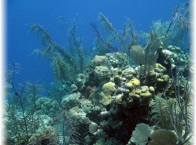Подводный мир Белиза, дайвинг в Белизе, посмотреть Белиз