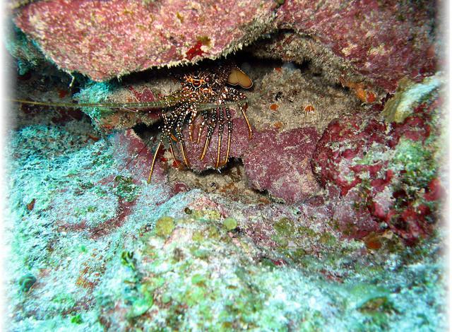 Подводный мир Белиза, дешево в Белиз, лучший дайвинг, голубая дыра