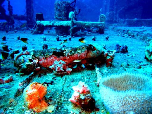 Дайвинг в Доминикане, подводный мир острова, рыбы карибского моря, риф фото, море в Доминикане