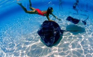 Флора и фауна доминиканы, дайвинг в доминикане,подводный мир,остров света, чудо город,свадьба на берегу океана в Доминикане