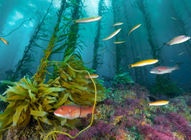 Красное море,подводный мир, чудеса света смотреть, фауна красного моря