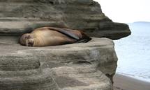 галапагосские черепахи, морской лев