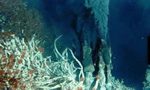 Глубинное море Вентс,глубоководный мир,чудеса света