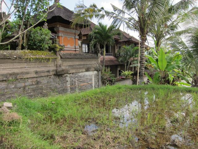 Сувениры с Бали, сувениры из Индонезии, достопримечательности убуда, посмотреть убуд