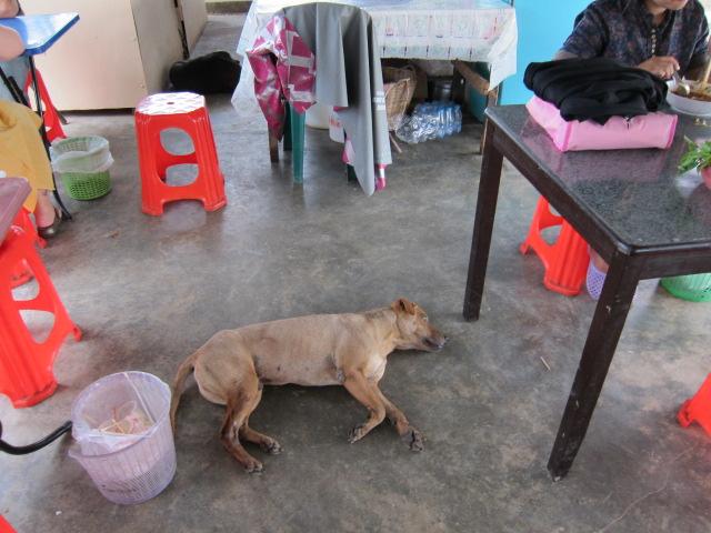 циональные наособенности тайланда, собаки на острове Пхукет, собаки на Самуи