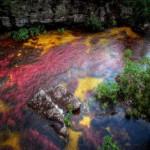 Чудеса природы: река пяти цветов в Колумбии