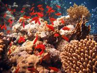 Красное море рыбы,является, море, Барьерный, мире, большой, острова, самых, Озеро, Палау, Байкал, Вентс, мест, Глубинное, известно, водой, Места, впечатляющих, занимается