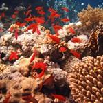 Красное море  Иордания