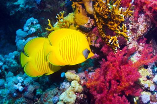 Красное море,подводный мир, чудеса света смотреть