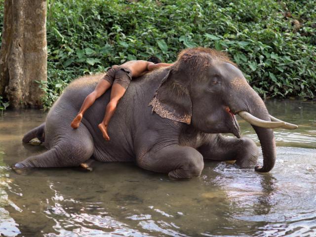слонов, слоны, слон, davaj, конечно, наверное, время, туристов, другое, особо, Чанг, Поэтому, малыш, видел, много, место, немало, умные