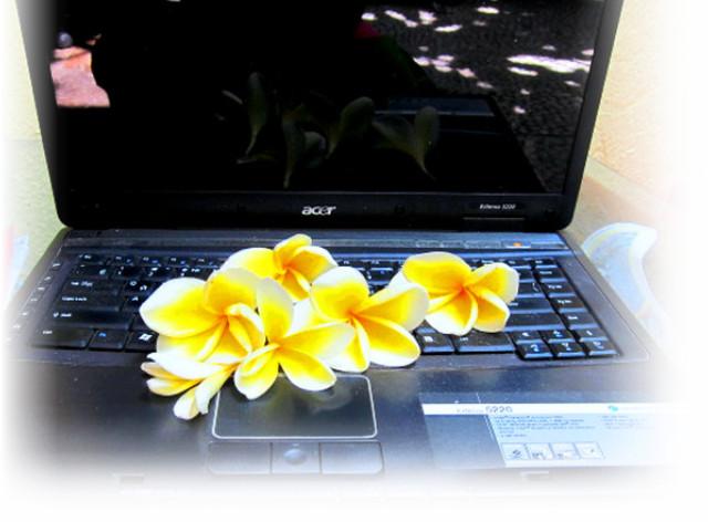 Заработок в интернете фото, мой успех, работа на Бали