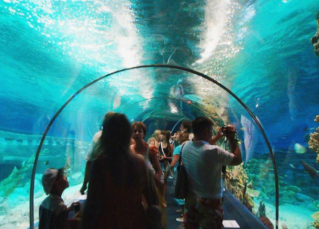 зоопарк аквариум,океанариум в сочи фото, зоопарк рыб,как добраться до океанариума в сочи, карта сочи,аквариум в зоопарке