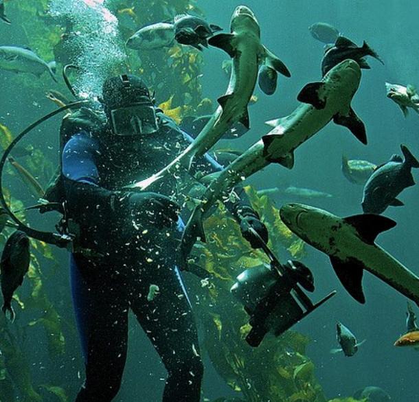 Сельдевая акула океанариум фото