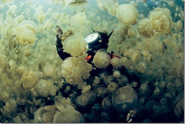 Острова Палау, озеро медуз, кольцо огня, острова рок