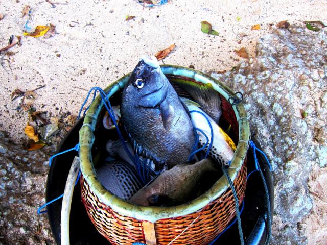 отзывы, волны, улов охотника,комментарии, часто, подводная охота на бали, плавать, Просто, назад, ноги, Пляж, ошибка, Пандава, месяцев, оторвать, волнами