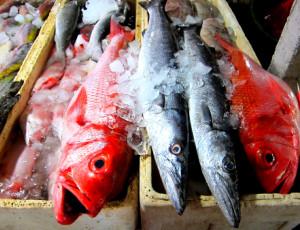 Поскольку, цены, тунца, примерно, рупий, комментарии, довольно, где, дол, используют, килограмм, углях, несколько, приготовить, морепродуктов, какой, решили, Там