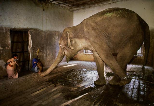 слоны в тайланде,белый слон тайланд,остров слон в тайланде,катание на слонах в тайланде