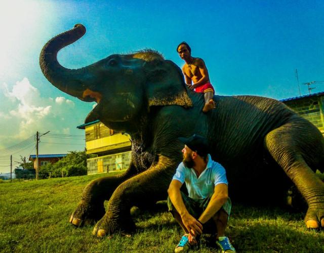 слоны в тайланде,белый слон тайланд,остров слон в тайланде,катание на слонах в тайланде, шоу слонов