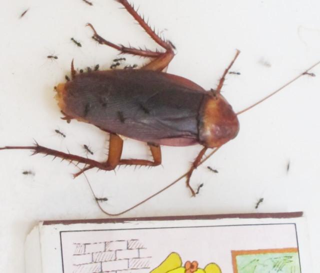 муравьи на бали