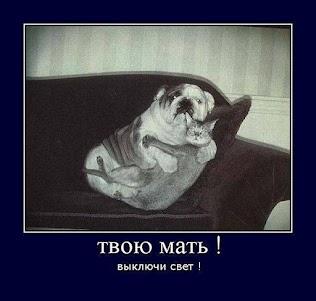 http://kasugati.ru/yumor
