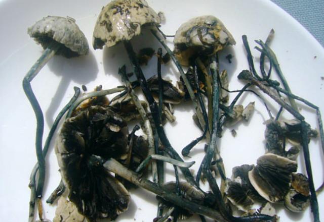 Как готовить грибы подосиновики и