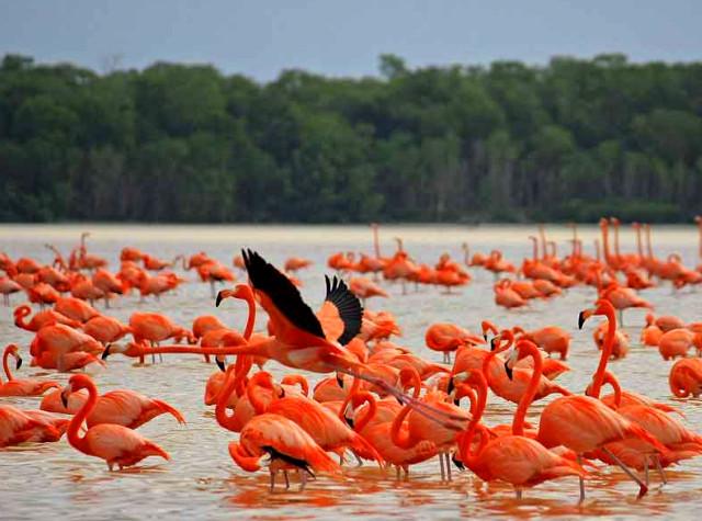 Розовые фламинго в мексике фото,туры в мексику отдых канделария,рассказы путешественников,рассказы о путешествиях и путешественниках,рассказ о путешественнике колумбе