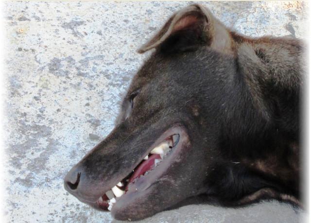 собаки в тайланде фото, что нельзя делать в тайланде, что можно делать в тайланде,опасности тайланда