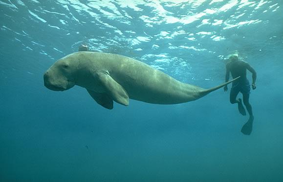 чудеса подводного мира, лучший дайвинг, глубоководный мир, Барьерный Риф фото
